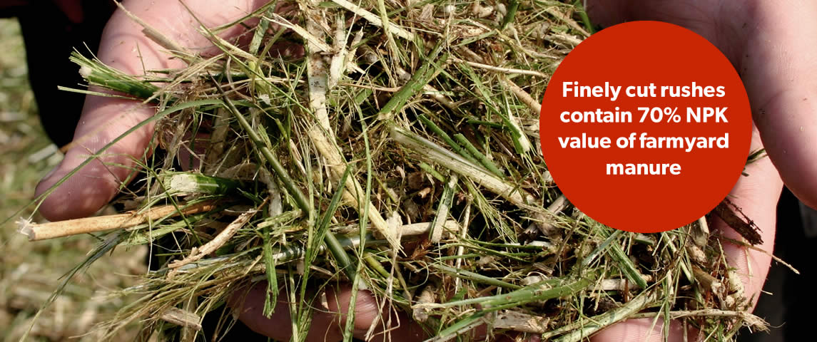 Finely cut rushes contain 70% NPK value of farmyard manure